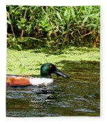 Northern Shoveler Drake Fleece Blanket