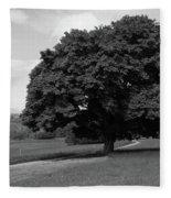 Oak Tree - Killarney National Park Fleece Blanket