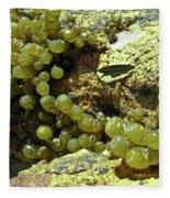Ocean Seaside Delight Fleece Blanket