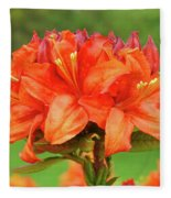 Office Art Prints Azaleas Botanical Landscape 11 Giclee Prints Baslee Troutman Fleece Blanket