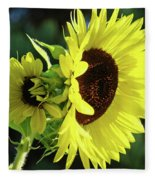 Office Art Sun Flowers Sunlit Sunflower Giclee Baslee Troutman Fleece Blanket