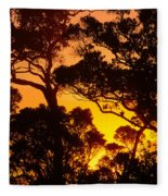 Ohia Trees At Sunset Fleece Blanket