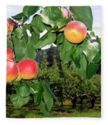 Okanagan Apricots Fleece Blanket