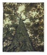 Old Sugar Maple Tree Fleece Blanket
