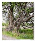 Old Weathered Tree Fleece Blanket