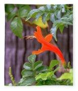 One Lone Flower Remains On The Cape Honeysuckle Fleece Blanket