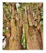One Tree Six Trunks Fleece Blanket