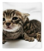 One Week Old Kittens Fleece Blanket