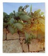Opuntia Cactus In The Sunset Fleece Blanket