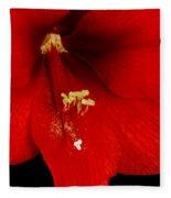 Orange Amaryllis Hippeastrum Bloom 12-29-10 Fleece Blanket