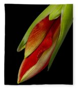Orange Amaryllis Hippeastrum In The Beginning 2-21-10 Fleece Blanket