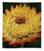 Orange And Yellow Strawflower Fleece Blanket