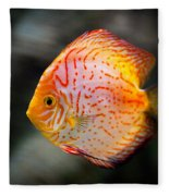 Orange Aquarium Fish In Zoo Fleece Blanket