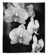 Orchid Cluster Close-up Fleece Blanket