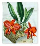 Orchid, Sophronitis Grandiflora, 1880 Fleece Blanket