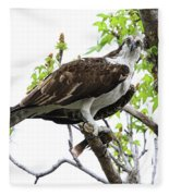 Osprey With Snack Fleece Blanket