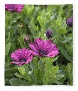 Osteospermum Flowers Fleece Blanket