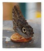 Owl Butterfly-1 Fleece Blanket by Paul Gulliver