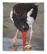 Oystercatcher Eating Clam Fleece Blanket