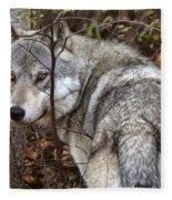 Panoramic Gray Wolf Yukon Fleece Blanket
