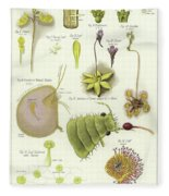 Parasites And Insectivorous Plants Fleece Blanket