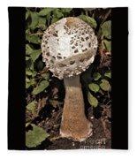 Parasol Mushroom           Macrolepiota Procera           August     Indiana   Fleece Blanket