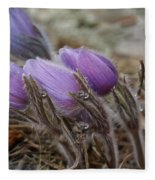 Pasque Flower Watercolor Fleece Blanket