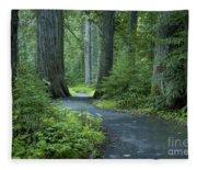 Path Through The Cedars Fleece Blanket