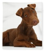 Patterdale Terrier Puppy Fleece Blanket