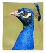 Peacock - 2 Fleece Blanket