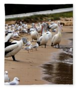 Pelicans At Pearl Beach 1.0 Fleece Blanket