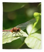 Perched Dragonfly Fleece Blanket