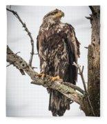 Perched Juvenile Eagle Fleece Blanket