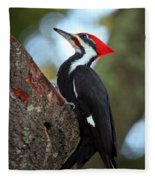 Pilated Woodpecker Fleece Blanket