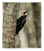 Pileated About To Take Flight Fleece Blanket