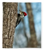Pileated Billed Woodpecker Pecking 2 Fleece Blanket