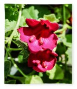 Pink Creeping Gloxinia Fleece Blanket
