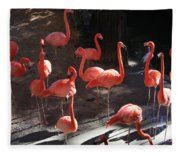 Pink Flamingos  Fleece Blanket