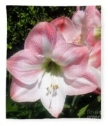 Pink Hippeastrum 01 Fleece Blanket
