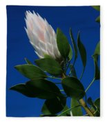 Pink King Protea Kula Maui Hawaii Fleece Blanket