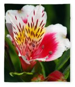 Pink Peruvian Lily 1 Fleece Blanket