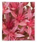Pink Sedum Flower Macro Fleece Blanket