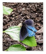 Pipevine Swallowtail Butterfly Fleece Blanket