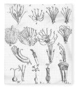 Plant Sexual Systems, Carl Linnaeus Fleece Blanket