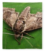 Plebeian Sphinx Moth Fleece Blanket