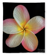Plumeria Flower On Black Fleece Blanket