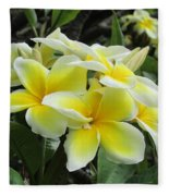Plumeria In Yellow  5 Fleece Blanket