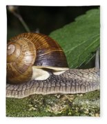 Pneumostome Of A Burgundy Snail Fleece Blanket
