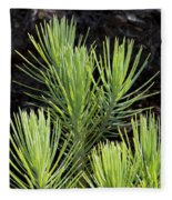 Ponderosa Pine 10 Fleece Blanket