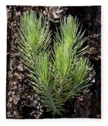 Ponderosa Pine 4 Fleece Blanket